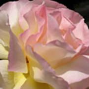 Tissue Paper Rose Art Print