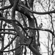 Tit Bird Perching On Tree Art Print