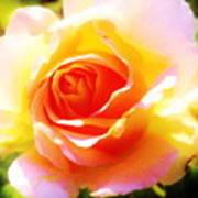 Tjs Rose A Glow Art Print