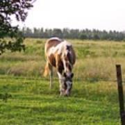 Tobiano Horse In Field Art Print