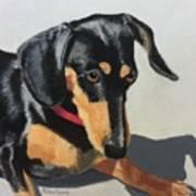 Toby Sits Still Art Print