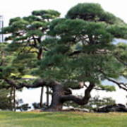 Tokyo Tree Art Print