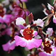 Tolumnia Pink Panther Orchid Art Print