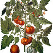 Tomato & Watermelon 1613 Art Print