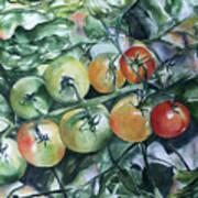 Tomatoes In Dad's Garden Art Print
