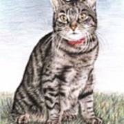 Tomcat Max Art Print