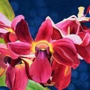 Tom's Orchid Art Print