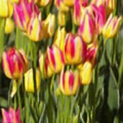 Too Many Tulips Art Print by Jeff Kolker