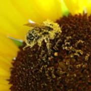 Too Much Pollen Art Print
