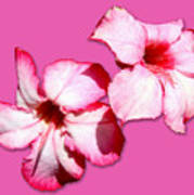 Too Pink Art Print