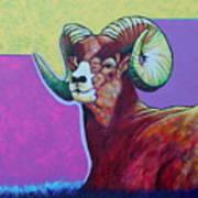 Top Heavy Big Horn Art Print