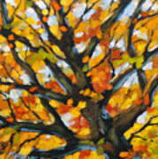Top Of The Maples Art Print