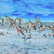 Topsail Skimmers Art Print