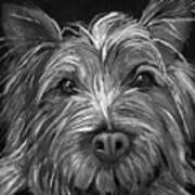 Tosha The Highland Terrier Art Print