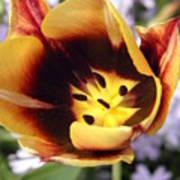 Totally Tulip Art Print
