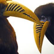 Toucan Play At That Game Art Print