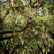 Towering Canopy Art Print