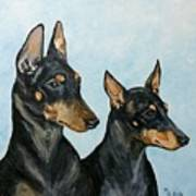 Toy Manchester Terriers Art Print