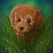Toy Poodle Puppy Art Print