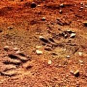 Tracks On Mars Art Print