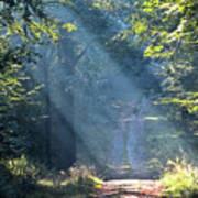 Trail In Morning Light Art Print