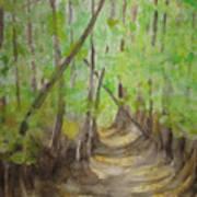 Trail In Woods Art Print