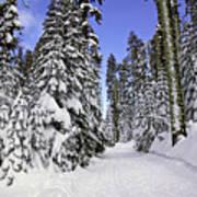 Trail Through Trees Art Print by Garry Gay