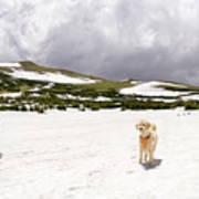 Traildog At Kingston Peak Snow Field Art Print