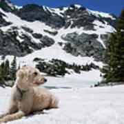 Traildog In Snow At Missouri Lakes Art Print
