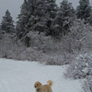 Traildog Loving The Winter Scene In The Flatirons Art Print