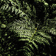 Tranquil Botanical Ferns Art Print