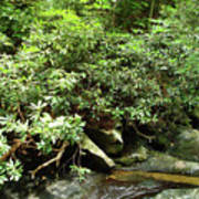 Tranquil Mountain Laurel Stream In The Great Smoky Mountains National Park Art Print