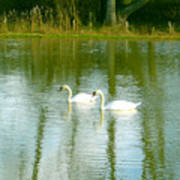 Tranquil Reflection Swans Art Print