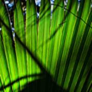 Translucent Green Art Print
