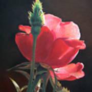 Translucent Rose Art Print