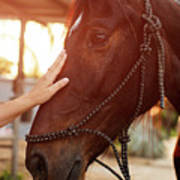 Treating From Depression With The Help Of A Horse Art Print