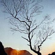 Tree Above Crummock Water Art Print
