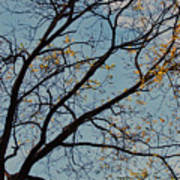 Tree Against The Sky Art Print