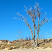 Tree And A Dune Art Print