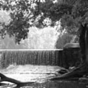 Tree And Dam Art Print