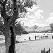 Tree And People By The Lake Art Print