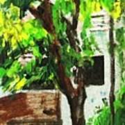 Tree And Shade Art Print
