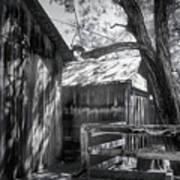 Tree And The Barn Art Print