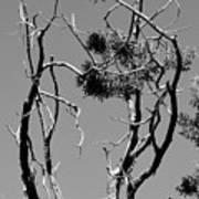 Tree Art Black And White 031015 Art Print