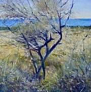 Tree At Aseeb Oman 2002 Art Print