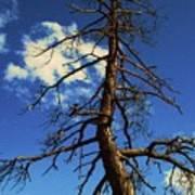 Tree At Bryce Canyon Utah. Art Print