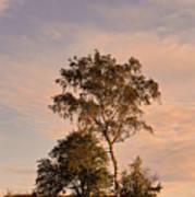 Tree At Dusk On Suomenlinna Island Art Print