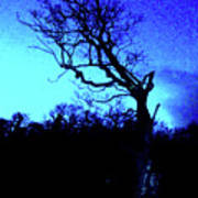Tree At Night Art Print