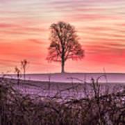 Tree At Sunrise Eaton Rapids Art Print