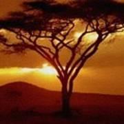 Tree At Sunset. L B Art Print